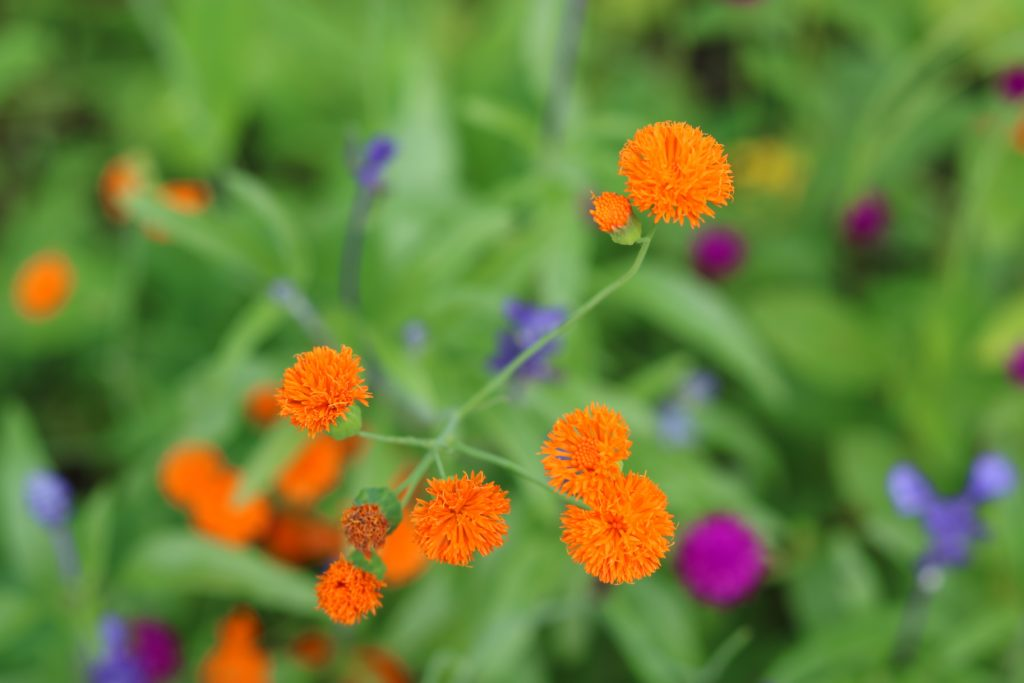 Small Orange Flowers