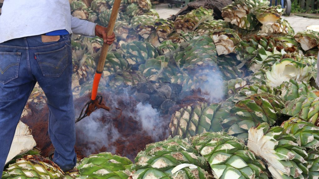 cooking down the agave pina